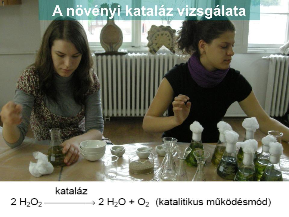 A növényi kataláz vizsgálata