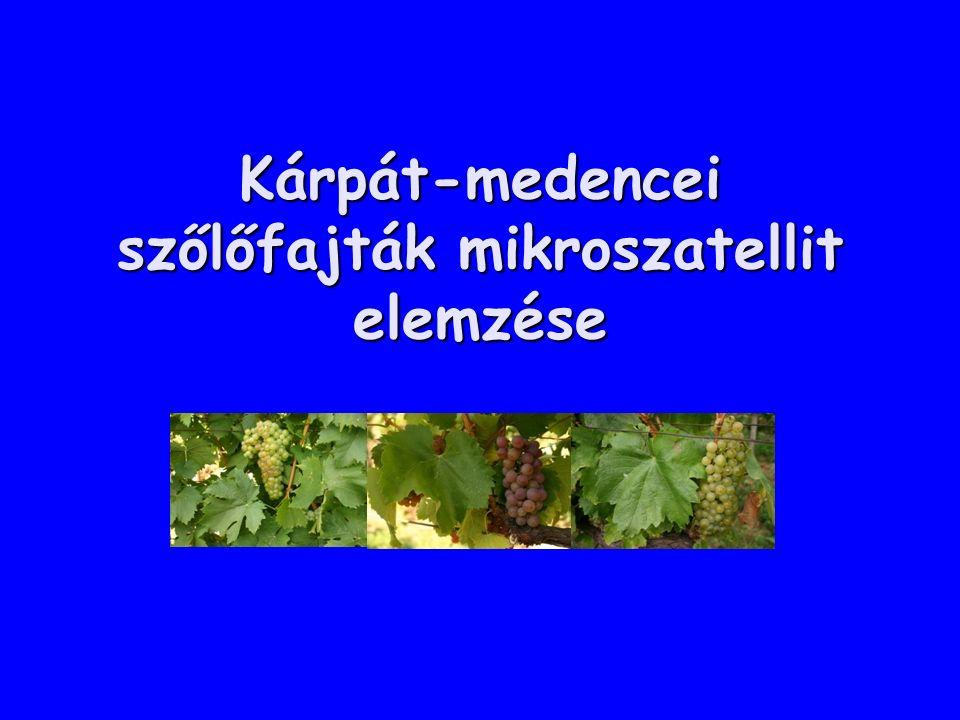 Kárpát-medencei szőlőfajták mikroszatellit elemzése