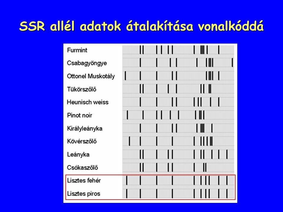 SSR allél adatok átalakítása vonalkóddá