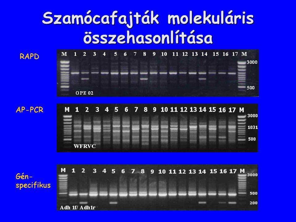 Szamócafajták molekuláris összehasonlítása WFRVC RAPD AP-PCR Gén- specifikus