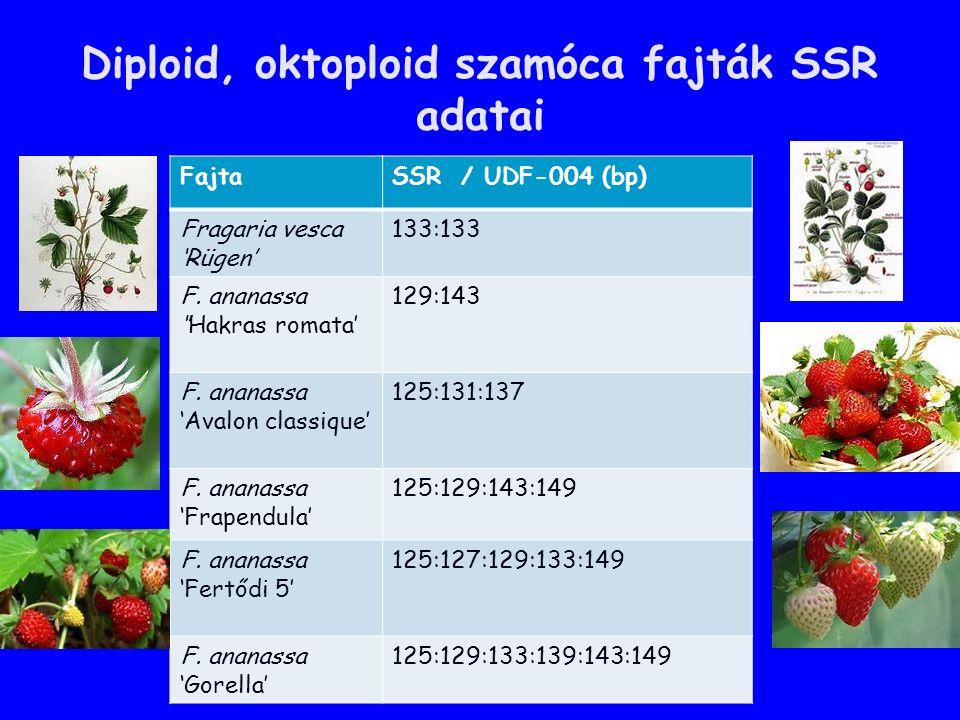 Diploid, oktoploid szamóca fajták SSR adatai FajtaSSR / UDF-004 (bp) Fragaria vesca 'Rügen' 133:133 F.