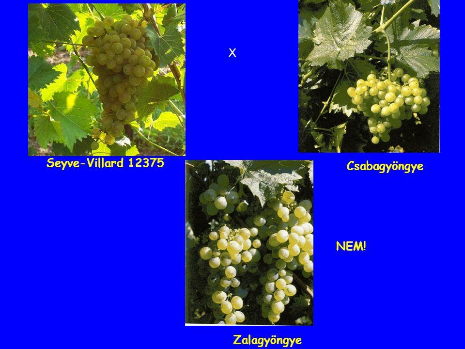 Zalagyöngye Csabagyöngye X Seyve-Villard 12375 NEM!