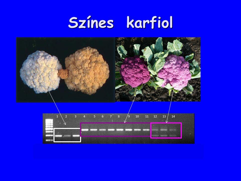 Színes karfiol