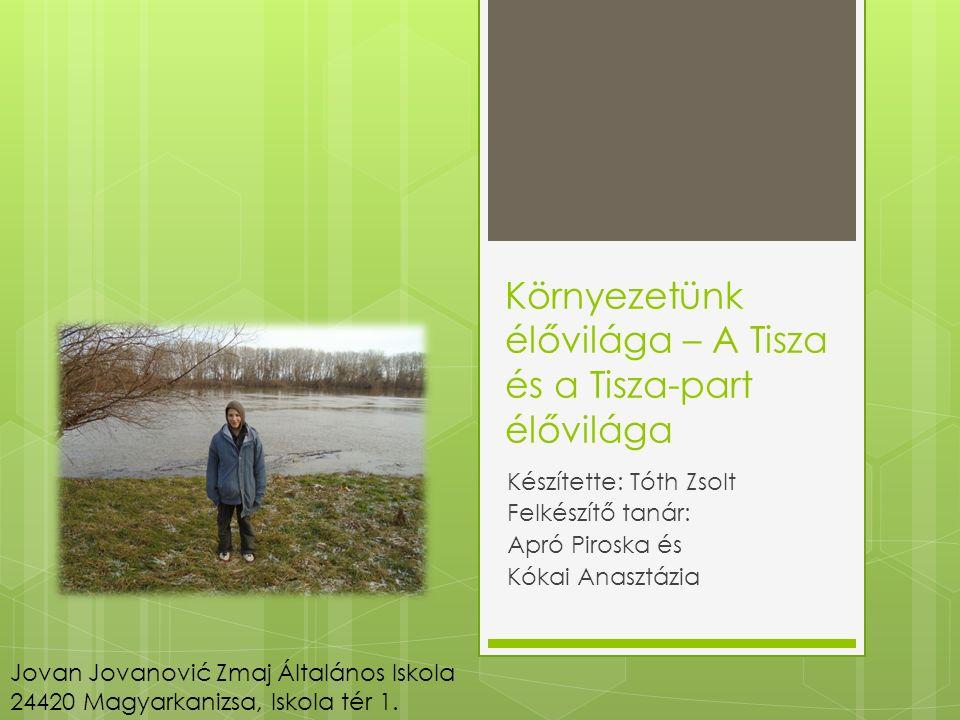 Tudjátok-e. Milyen növények élnek a Tisza parton.