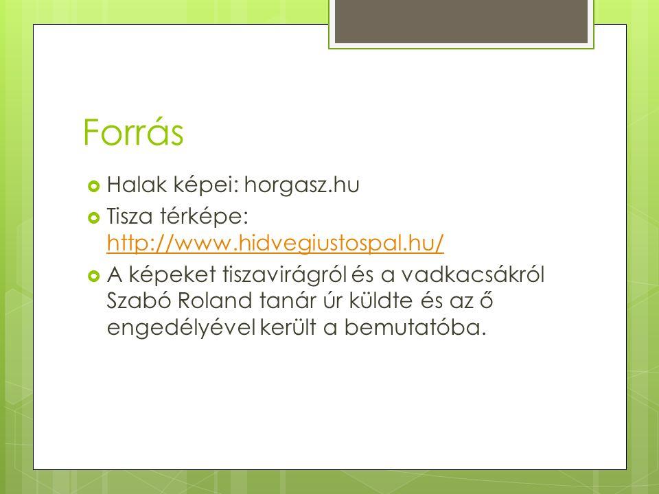 Forrás  Halak képei: horgasz.hu  Tisza térképe: http://www.hidvegiustospal.hu/ http://www.hidvegiustospal.hu/  A képeket tiszavirágról és a vadkacsákról Szabó Roland tanár úr küldte és az ő engedélyével került a bemutatóba.