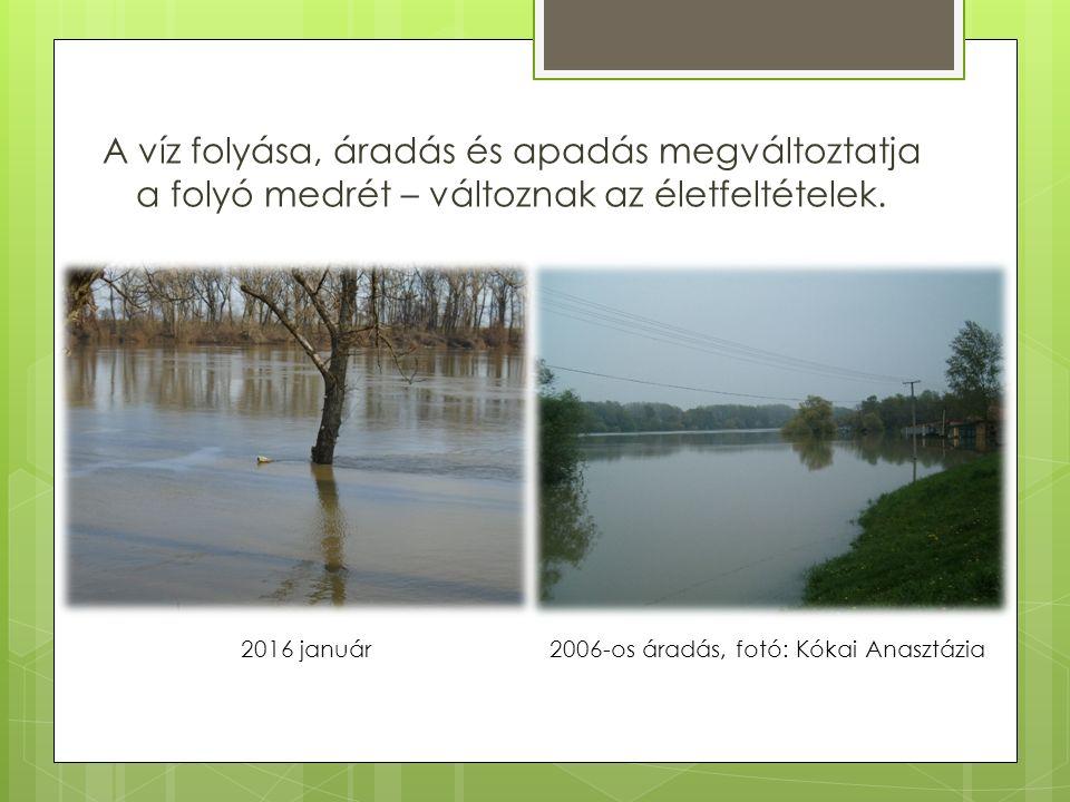 A víz folyása, áradás és apadás megváltoztatja a folyó medrét – változnak az életfeltételek.