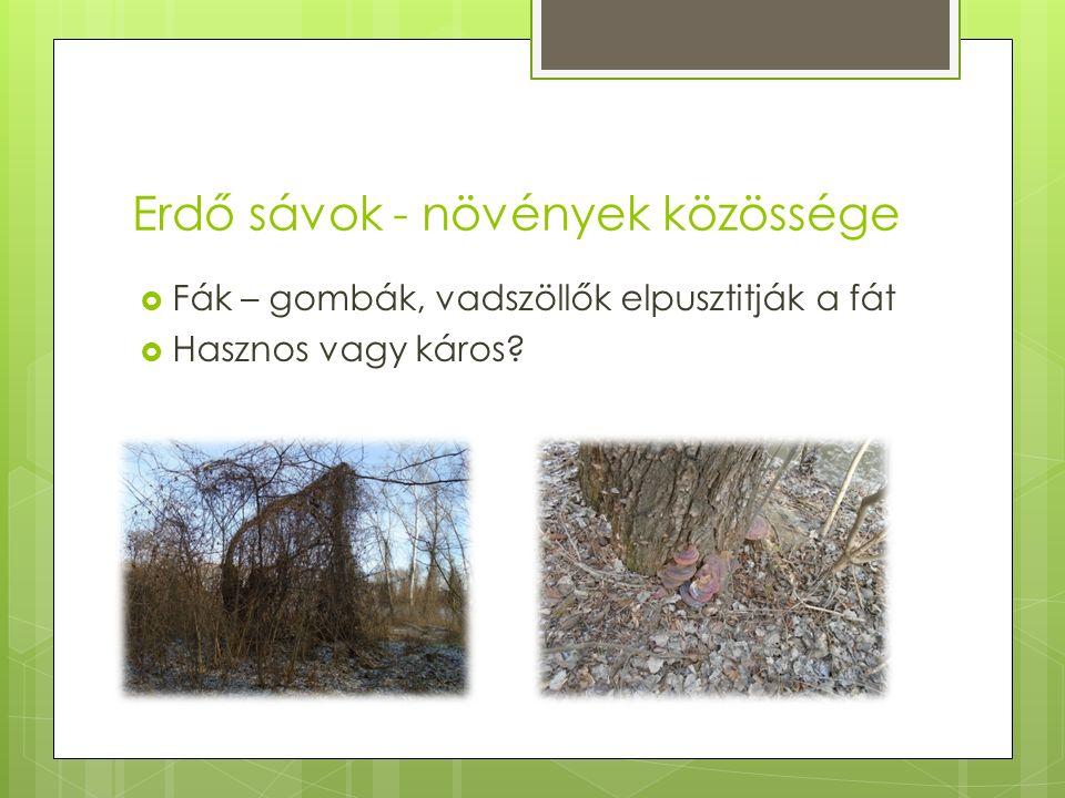 Erdő sávok - növények közössége  Fák – gombák, vadszöllők elpusztitják a fát  Hasznos vagy káros