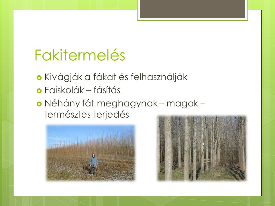 Fakitermelés  Kivágják a fákat és felhasználják  Faiskolák – fásítás  Néhány fát meghagynak – magok – természtes terjedés