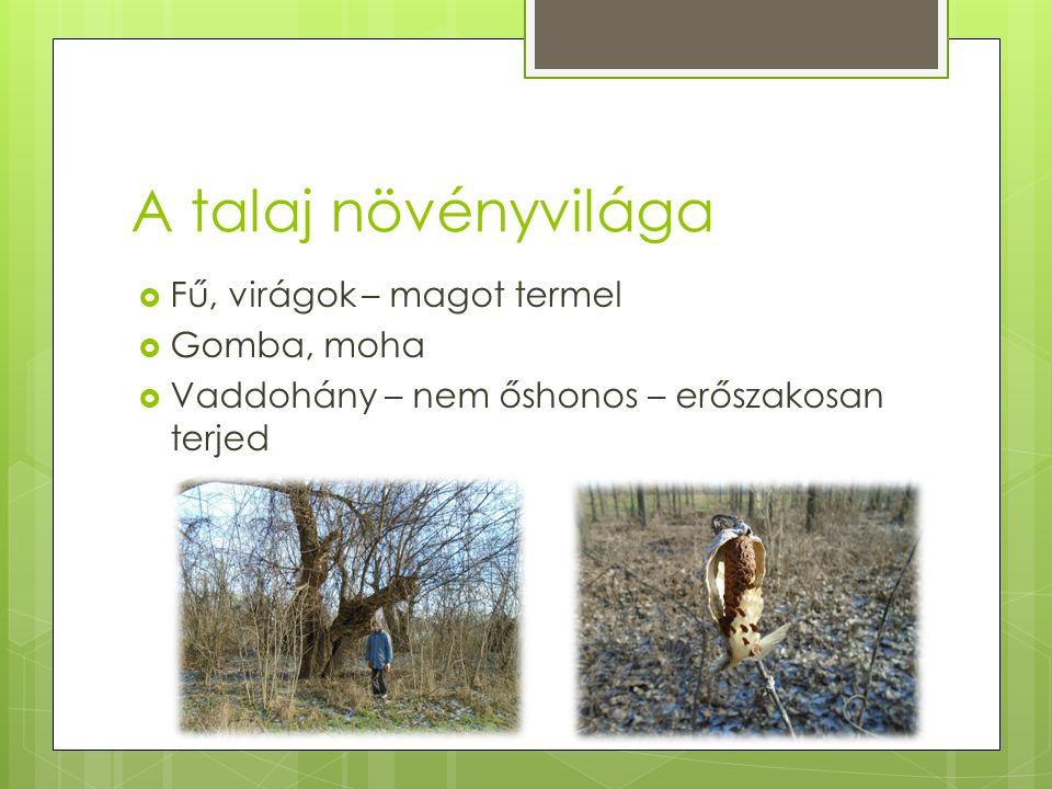 A talaj növényvilága  Fű, virágok – magot termel  Gomba, moha  Vaddohány – nem őshonos – erőszakosan terjed