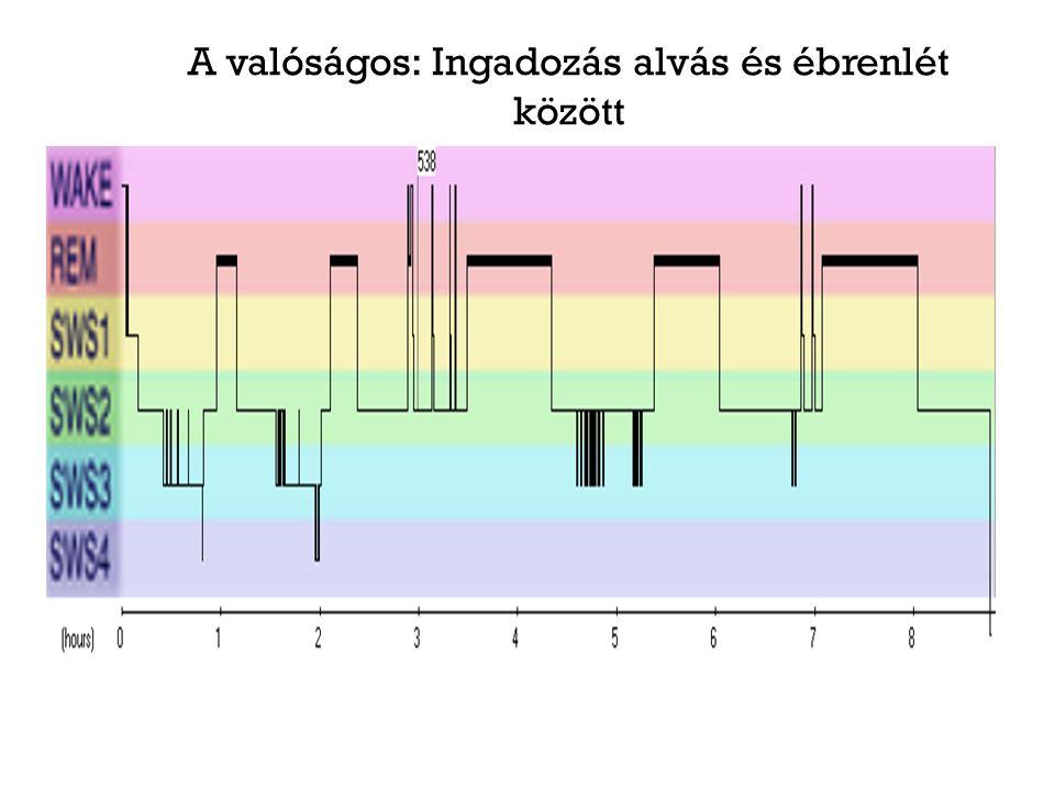 A lokális alvás jelenségköre Célzott Motoros ingerlés vs.
