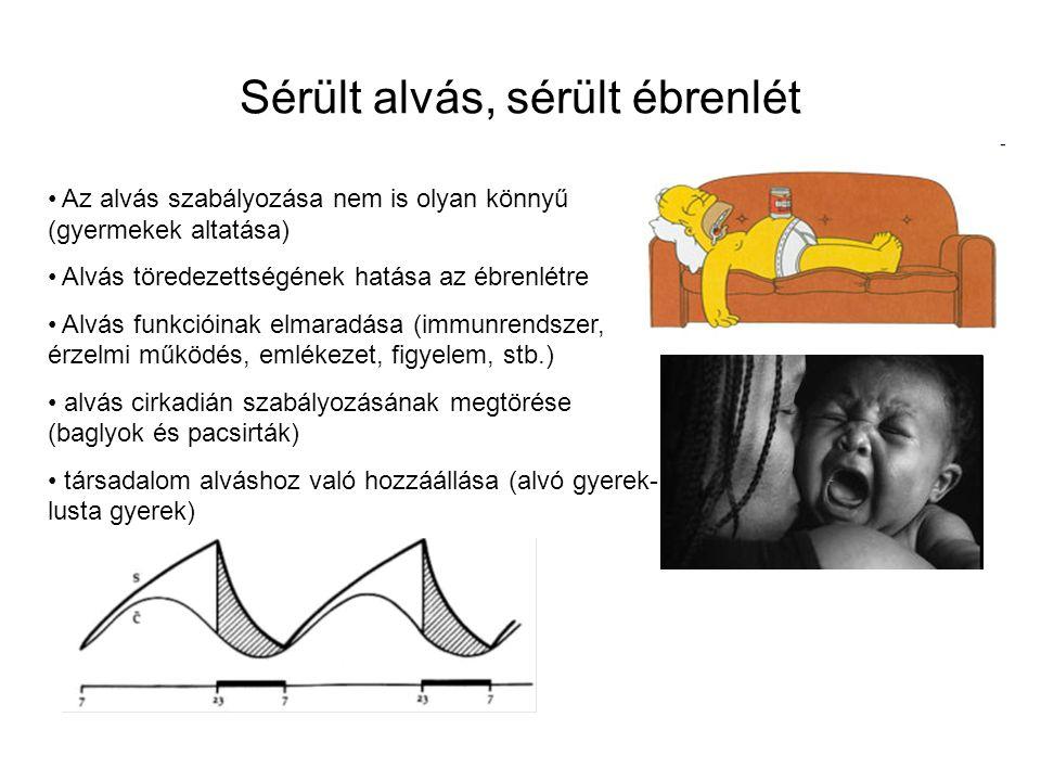 Sérült alvás, sérült ébrenlét Az alvás szabályozása nem is olyan könnyű (gyermekek altatása) Alvás töredezettségének hatása az ébrenlétre Alvás funkcióinak elmaradása (immunrendszer, érzelmi működés, emlékezet, figyelem, stb.) alvás cirkadián szabályozásának megtörése (baglyok és pacsirták) társadalom alváshoz való hozzáállása (alvó gyerek- lusta gyerek)