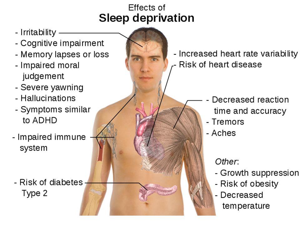Homloklebeny kitűntetett szerepe alvásmegvonás e területhez köthető szellemi funkciókat érinti leginkább alvás során itt jelennek meg legmarkánsabban a lassú hullámok – mélyalvás a frontális lassú hullámtevékenység mennyisége összefügg a másnapi szellemi teljesítménnyel