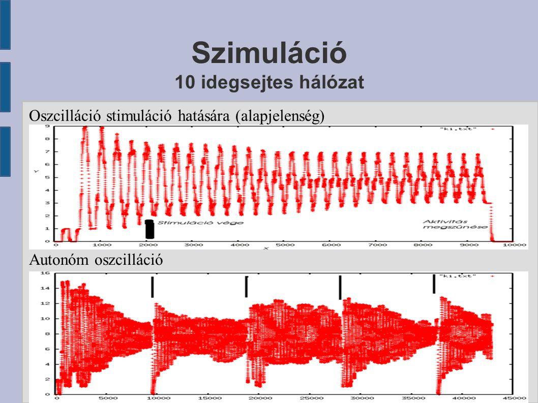 Szimuláció 10 idegsejtes hálózat Oszcilláció stimuláció hatására (alapjelenség) Autonóm oszcilláció
