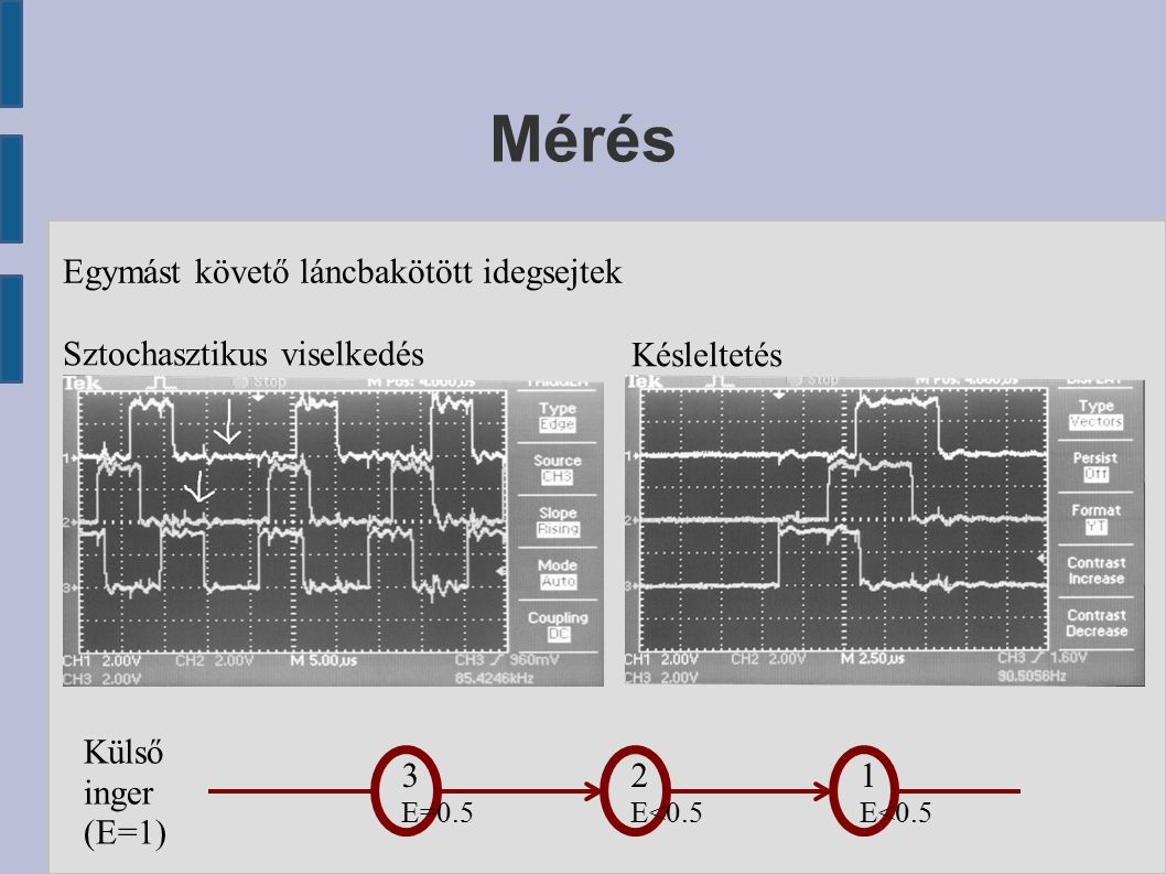 Mérés Egymást követő láncbakötött idegsejtek Sztochasztikus viselkedés Késleltetés 3 E=0.5 2 E<0.5 Külső inger (E=1) 1 E<0.5