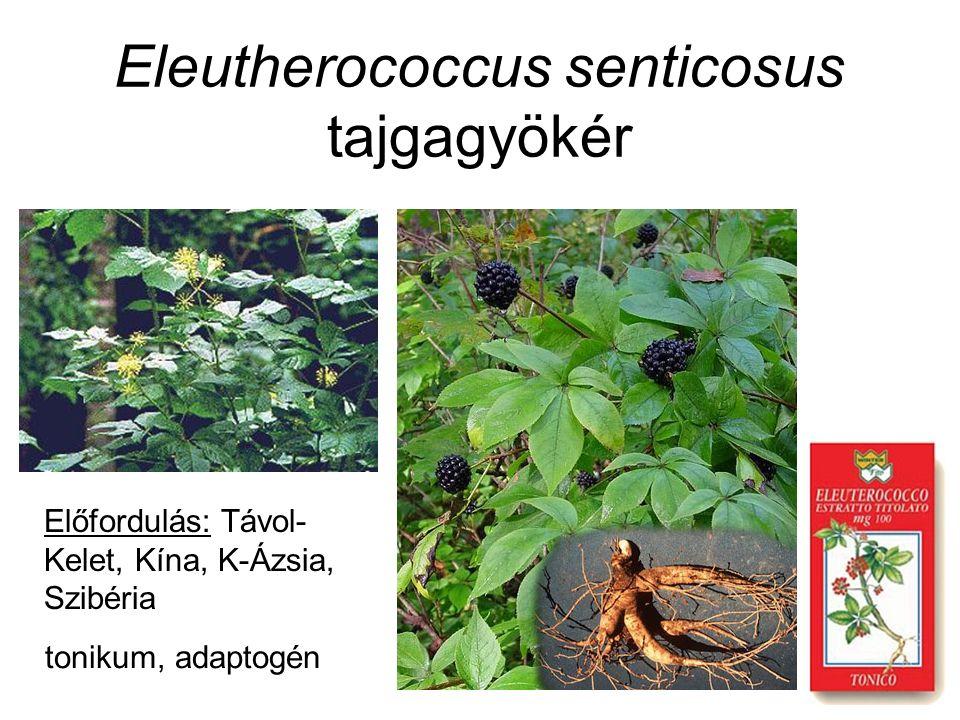 Eleutherococcus senticosus tajgagyökér Előfordulás: Távol- Kelet, Kína, K-Ázsia, Szibéria tonikum, adaptogén