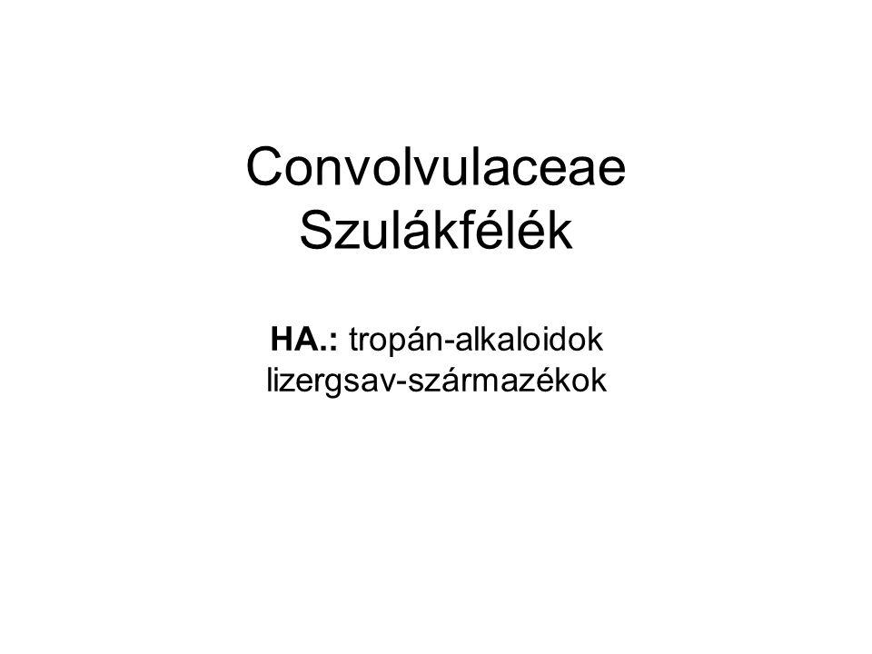 Convolvulaceae Szulákfélék HA.: tropán-alkaloidok lizergsav-származékok