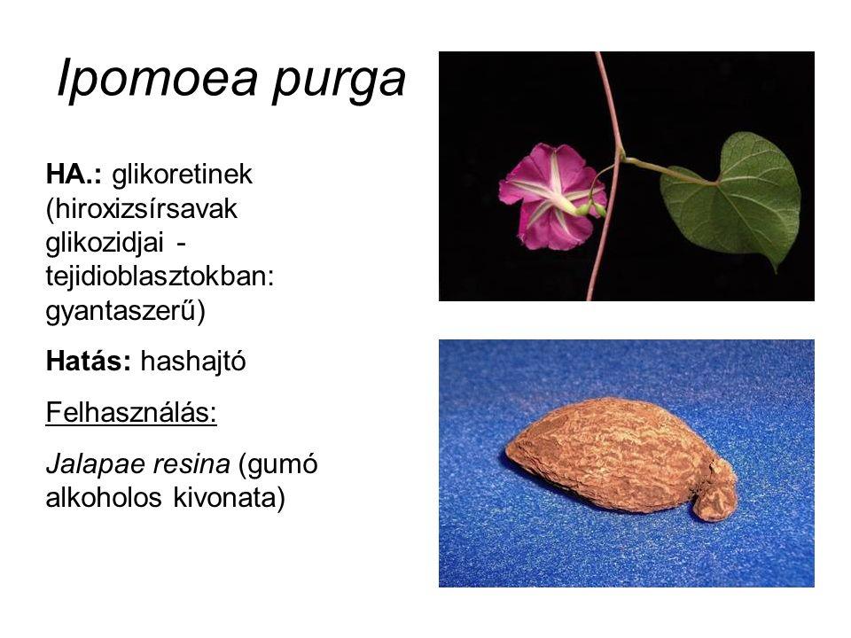 Ipomoea purga HA.: glikoretinek (hiroxizsírsavak glikozidjai - tejidioblasztokban: gyantaszerű) Hatás: hashajtó Felhasználás: Jalapae resina (gumó alk