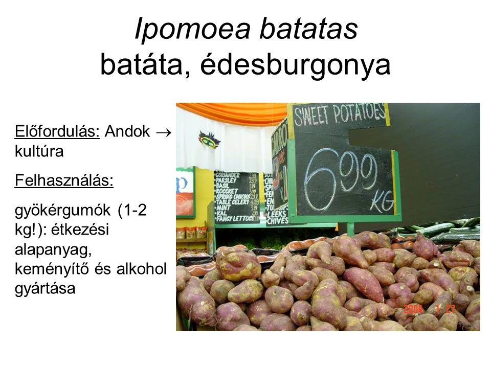 Ipomoea batatas batáta, édesburgonya Előfordulás: Andok  kultúra Felhasználás: gyökérgumók (1-2 kg!): étkezési alapanyag, keményítő és alkohol gyártása