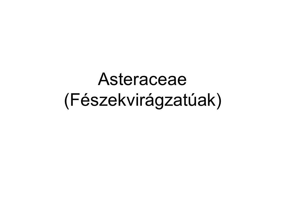 Asteraceae (Fészekvirágzatúak)