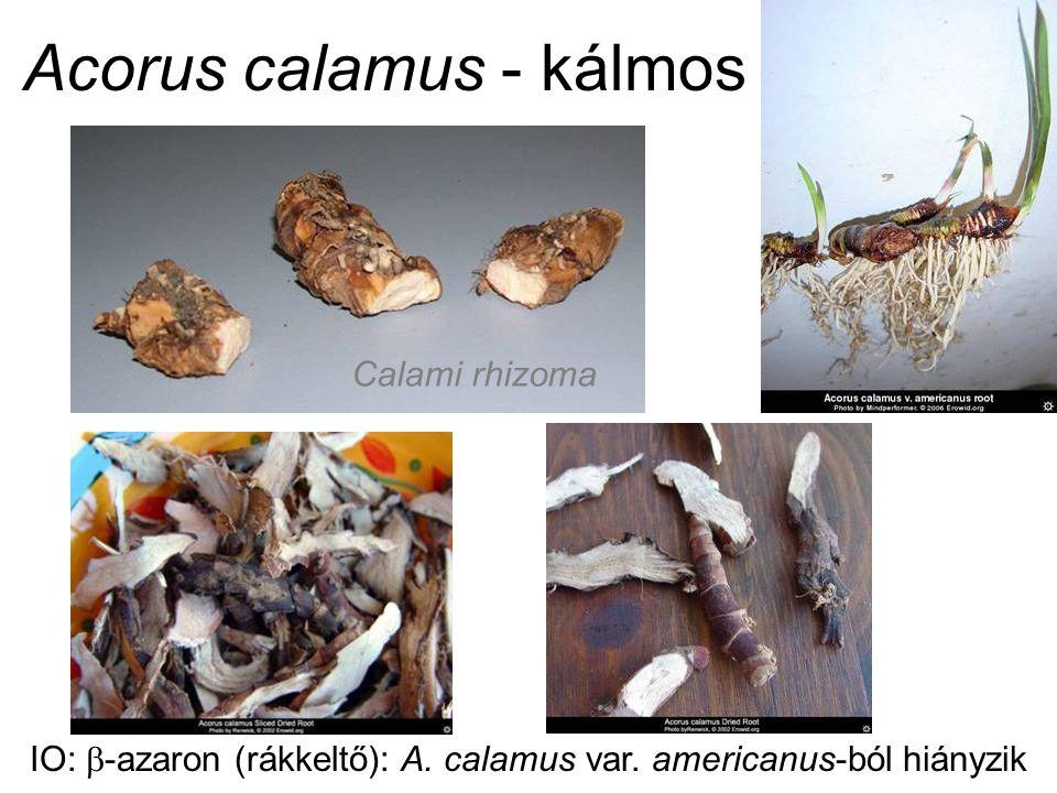 Calami rhizoma IO:  -azaron (rákkeltő): A. calamus var. americanus-ból hiányzik