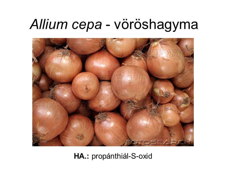Allium cepa - vöröshagyma HA.: propánthiál-S-oxid