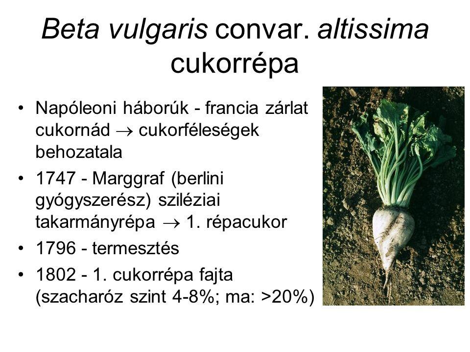 Beta vulgaris convar. altissima cukorrépa Napóleoni háborúk - francia zárlat cukornád  cukorféleségek behozatala 1747 - Marggraf (berlini gyógyszerés