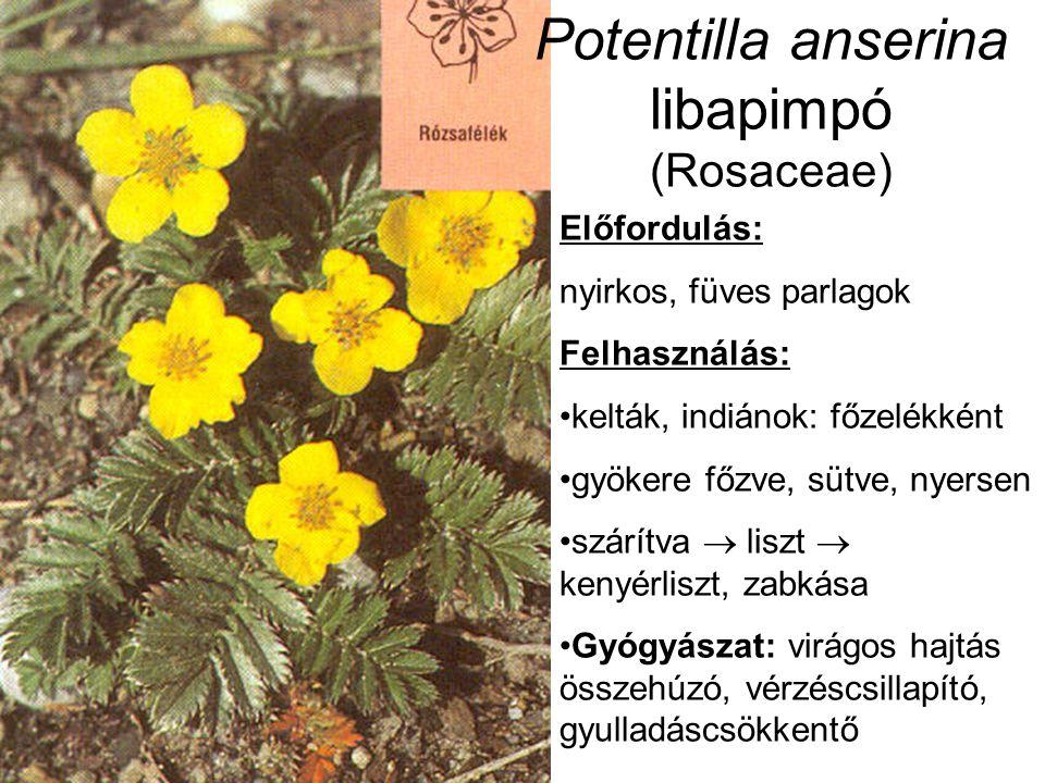 Potentilla anserina libapimpó (Rosaceae) Előfordulás: nyirkos, füves parlagok Felhasználás: kelták, indiánok: főzelékként gyökere főzve, sütve, nyersen szárítva  liszt  kenyérliszt, zabkása Gyógyászat: virágos hajtás összehúzó, vérzéscsillapító, gyulladáscsökkentő