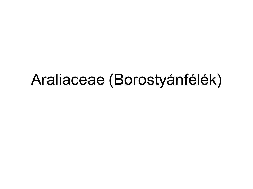 Araliaceae (Borostyánfélék)