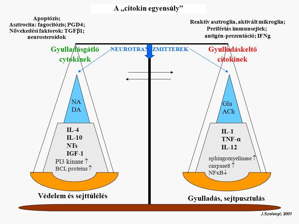 """Gyulladáskeltő citokinek Gyulladásgátló cytokinek IL-4 IL-10 NTs IGF-1 IL-1 TNF-  IL-12 Védelem és sejttúlélés PI3 kinase  BCL proteins  sphingomyelinase  caspase8  NF  B  NEUROTRANSZMITTEREK Glu ACh NA DA Gyulladás, sejtpusztulás J.Szelenyi; 2001 A """"citokin egyensúly Apoptózis; Asztrocita: fagocitózis; PGD4; Növekedési faktorok: TGF  1; neurosteroidok Reaktív asztroglia, aktivált mikroglia; Perifériás immunsejtek; antigén-prezentáció; IFNg"""