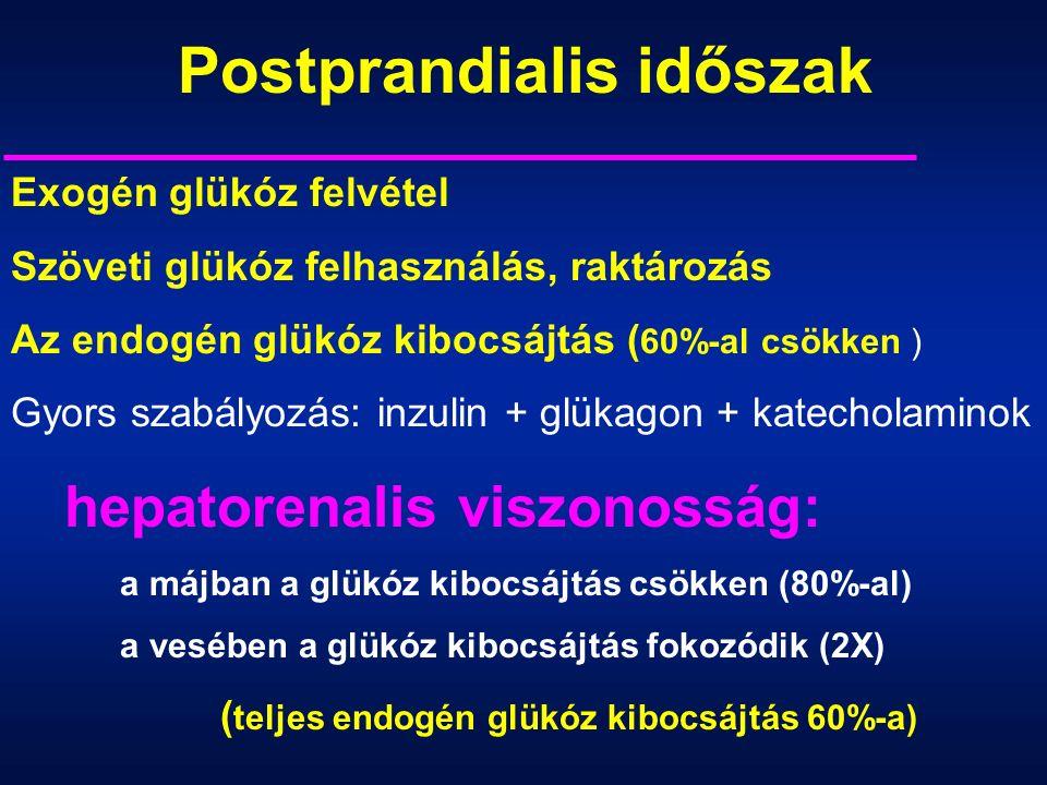 Exogén glükóz felvétel Szöveti glükóz felhasználás, raktározás Az endogén glükóz kibocsájtás ( 60%-al csökken ) Gyors szabályozás: inzulin + glükagon + katecholaminok hepatorenalis viszonosság: a májban a glükóz kibocsájtás csökken (80%-al) a vesében a glükóz kibocsájtás fokozódik (2X) ( teljes endogén glükóz kibocsájtás 60%-a) Postprandialis időszak