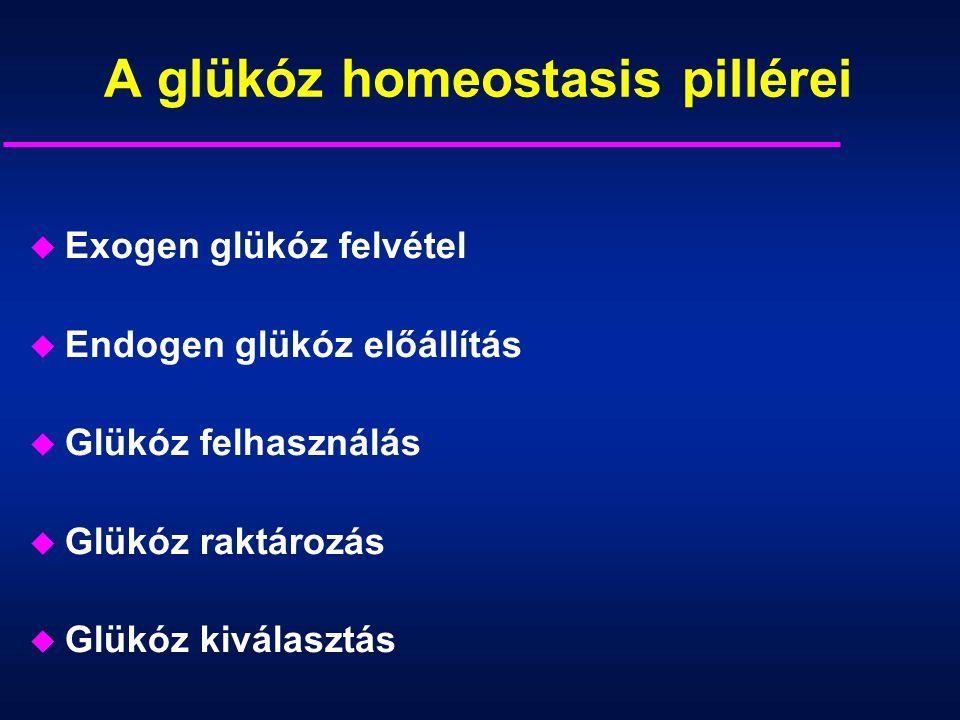 A glükóz homeostasis pillérei u Exogen glükóz felvétel u Endogen glükóz előállítás u Glükóz felhasználás u Glükóz raktározás u Glükóz kiválasztás