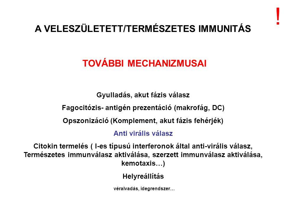 NK-sejt IL-12 makrofág IFN  citokinek neutrofil TNF-  GYULLADÁS – AKUT FÁZIS REAKCIÓ A TERMÉSZETES IMMUNITÁS MECHANIZMUSAI óra Plazma szint LPS (endotoxin) (Gram(-) baktérium TNF-  IL-1  IL-6 A gyulladást kiváltó (pro-inflammatorikus) citokinek felszabadulásának kinetikája bakteriális fertőzést követően TNF-  IL-1  IL-6 Néhány óra AKUT FÁZIS REAKCIÓ Baktérium LPS VESZÉLY JEL AKTIVÁCIÓ PRR