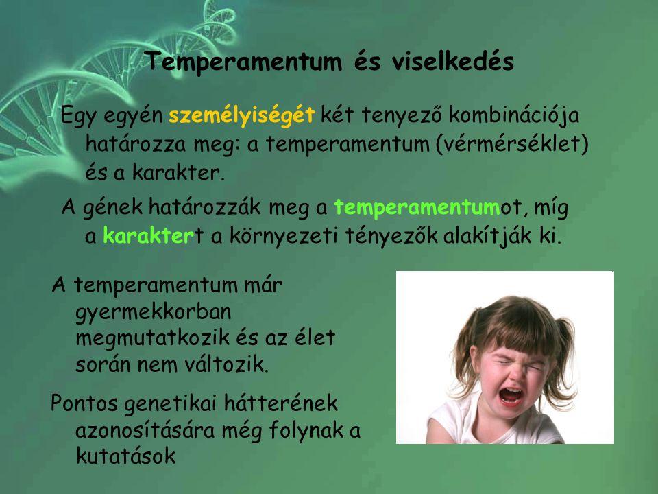 Temperamentum és viselkedés Egy egyén személyiségét két tenyező kombinációja határozza meg: a temperamentum (vérmérséklet) és a karakter. A gének hatá