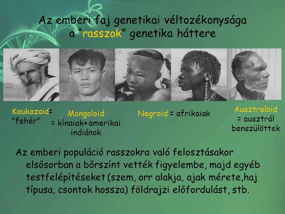 """Az emberi faj genetikai véltozékonysága a """"rasszok"""" genetika háttere Az emberi populáció rasszokra való felosztásakor elsősorban a bőrszínt vették fig"""
