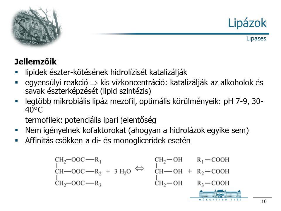 10 Lipázok Jellemzőik  lipidek észter-kötésének hidrolízisét katalizálják  egyensúlyi reakció  kis vízkoncentráció: katalizálják az alkoholok és savak észterképzését (lipid szintézis)  legtöbb mikrobiális lipáz mezofil, optimális körülményeik: pH 7-9, 30- 40°C termofilek: potenciális ipari jelentőség  Nem igényelnek kofaktorokat (ahogyan a hidrolázok egyike sem)  Affinitás csökken a di- és monogliceridek esetén Lipases 