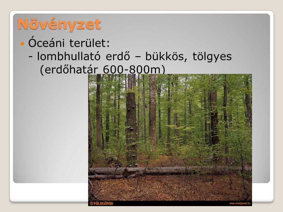 Növényzet Óceáni terület: - lombhullató erdő – bükkös, tölgyes (erdőhatár 600-800m)