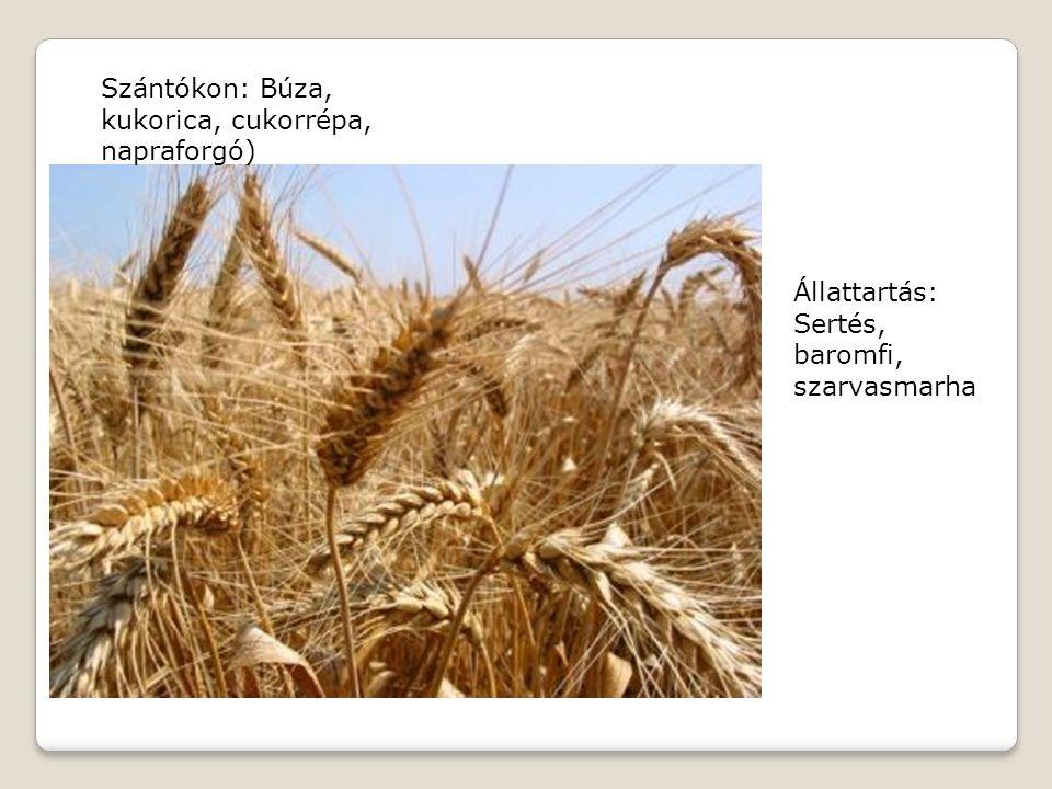 Szántókon: Búza, kukorica, cukorrépa, napraforgó) Állattartás: Sertés, baromfi, szarvasmarha