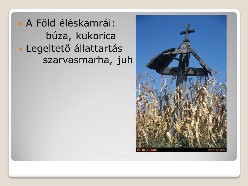 A Föld éléskamrái: búza, kukorica Legeltető állattartás szarvasmarha, juh