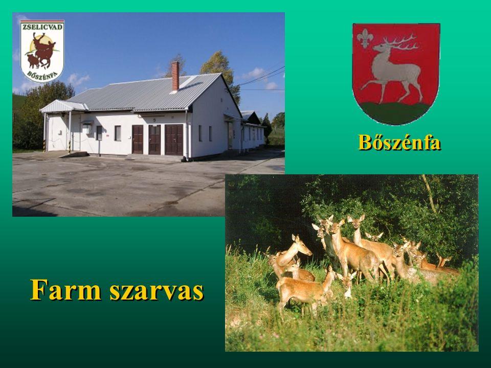 Tiszai árterületek legeltetése