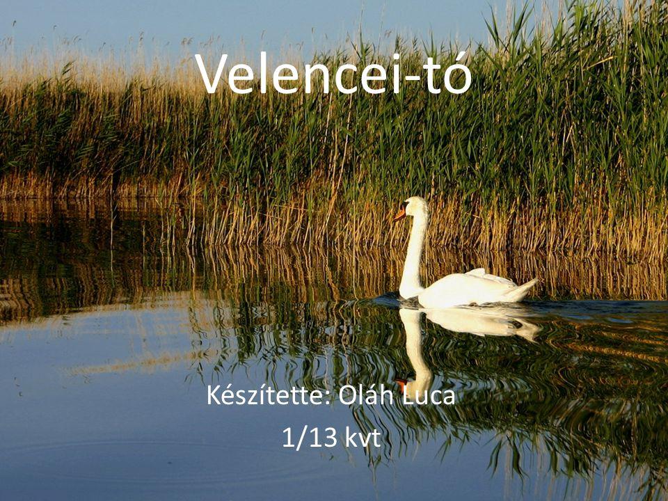 Velencei-tó Készítette: Oláh Luca 1/13 kvt