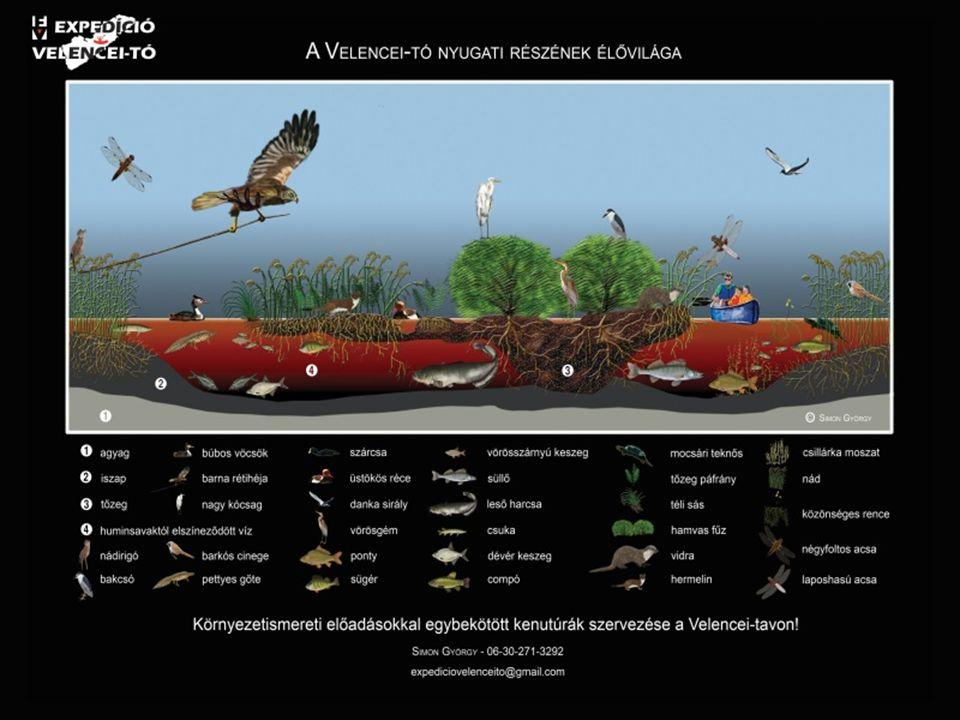Élővilága Állatok: barna rétihéja búbos vöcsök dankasirály kanalasgém kékes rétihéja kis vöcsök nagy kócsag vaddisznó (a rezervátumban) Vidra bütykös hattyú tőkés réce vetési lúd vízityúk Növények: Gyékény Nád hínár Tengermelléki káka