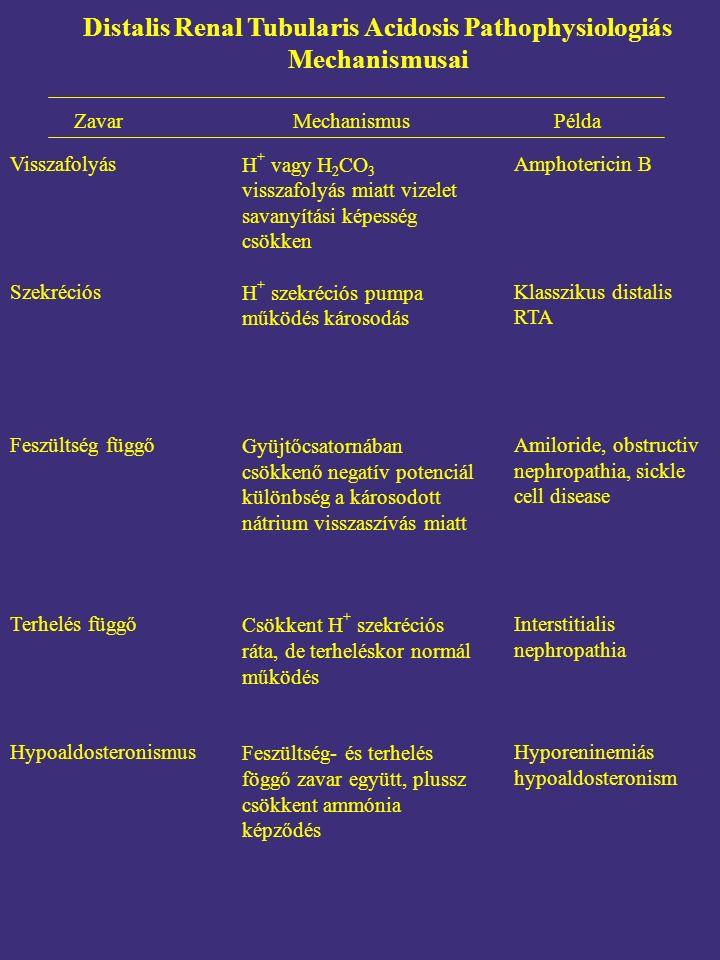 Zavar MechanismusPélda Visszafolyás Szekréciós Feszültség függő Terhelés függő Hypoaldosteronismus Amphotericin B Klasszikus distalis RTA Amiloride, obstructiv nephropathia, sickle cell disease Interstitialis nephropathia Hyporeninemiás hypoaldosteronism Distalis Renal Tubularis Acidosis Pathophysiologiás Mechanismusai H + vagy H 2 CO 3 visszafolyás miatt vizelet savanyítási képesség csökken H + szekréciós pumpa működés károsodás Gyüjtőcsatornában csökkenő negatív potenciál különbség a károsodott nátrium visszaszívás miatt Csökkent H + szekréciós ráta, de terheléskor normál működés Feszültség- és terhelés föggő zavar együtt, plussz csökkent ammónia képződés