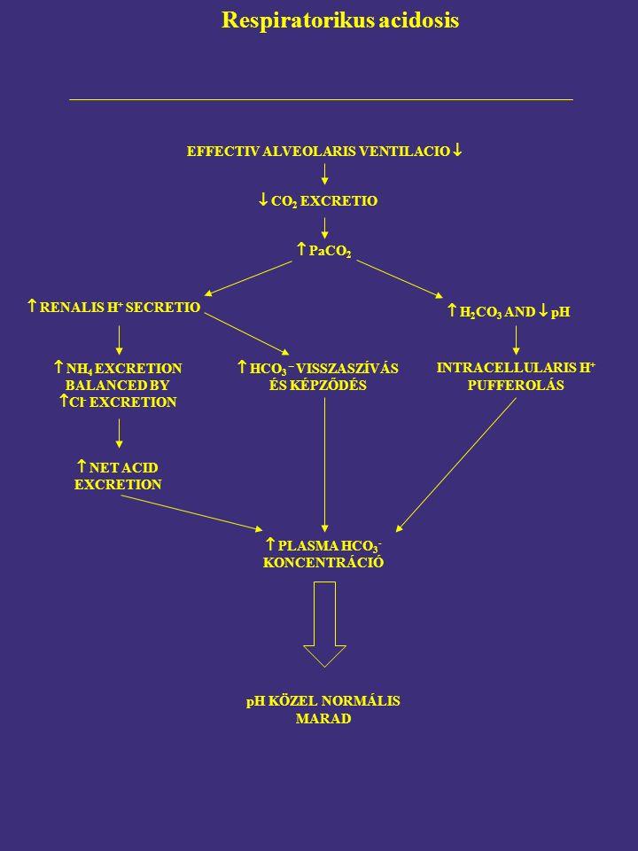  H 2 CO 3 AND  pH Respiratorikus acidosis EFFECTIV ALVEOLARIS VENTILACIO   CO 2 EXCRETIO  PaCO 2  RENALIS H + SECRETIO  NH 4 EXCRETION BALANCED BY  Cl - EXCRETION INTRACELLULARIS H + PUFFEROLÁS  NET ACID EXCRETION  HCO 3 – VISSZASZÍVÁS ÉS KÉPZŐDÉS  PLASMA HCO 3 - KONCENTRÁCIÓ pH KÖZEL NORMÁLIS MARAD