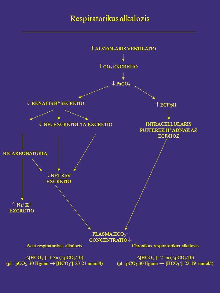  ECF pH Acut respiratorikus alkalozis  [HCO 3 - ]= 1-3x (  pCO 2 /10) (pl.: pCO 2 : 30 Hgmm  [HCO 3 - ]: 23-21 mmol/l) Respiratorikus alkalozis  ALVEOLARIS VENTILATIO  CO 2 EXCRETIO  PaCO 2  RENALIS H + SECRETIO  NH 4 EXCRETIO  TA EXCRETIO INTRACELLULARIS PUFFEREK H + ADNAK AZ ECF-HOZ BICARBONATURIA  NET SAV EXCRETIO  Na + K + EXCRETIO PLASMA HCO 3 - CONCENTRATIO  Chronikus respiratorikus alkalozis  [HCO 3 - ]= 2-5x (  pCO 2 /10) (pl.: pCO 2 :30 Hgmm  [HCO 3 - ]: 22-19 mmol/l)