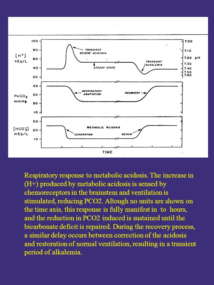 Respiratory response to metabolic acidosis. The increase in (H+) produced by metabolic acidosis is sensed by chemoreceptors in the brainstem and venti