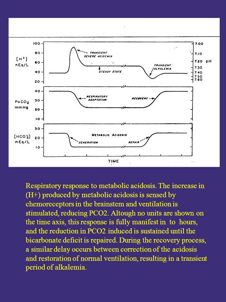 Respiratory response to metabolic acidosis.