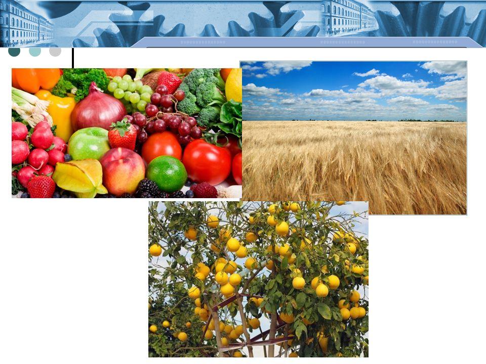 A talaj ökológiai funkciói: biomassza- termelés szűrő, kiegyenlítő, átalakító, raktározó szerep ökológiai élettér genetikai tartalék klíma- és eróziószabályozás