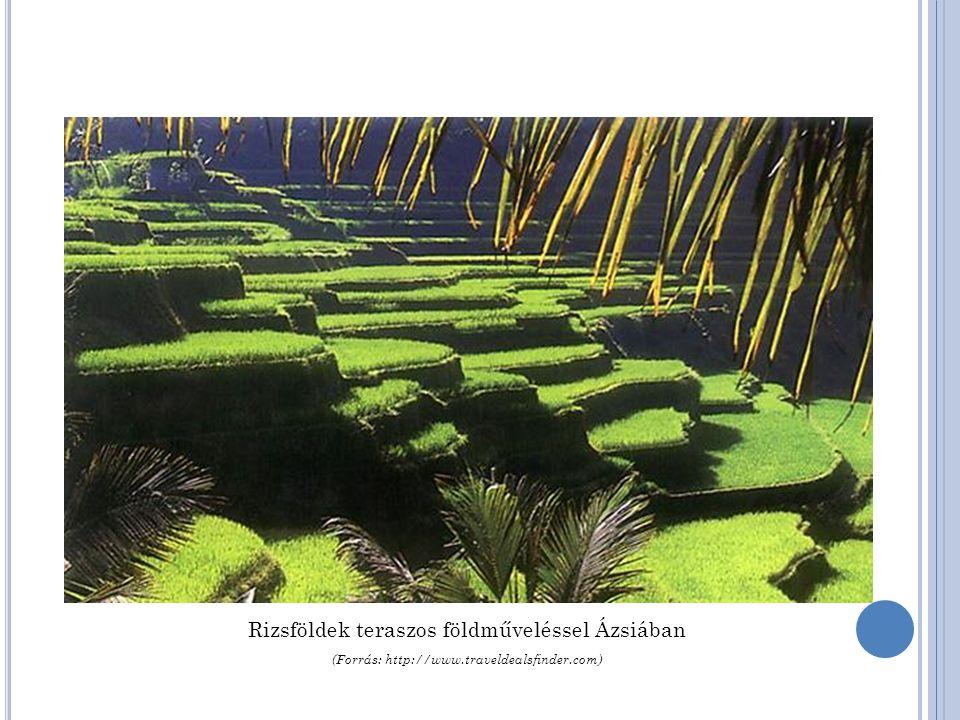 Rizsföldek teraszos földműveléssel Ázsiában (Forrás: http://www.traveldealsfinder.com)