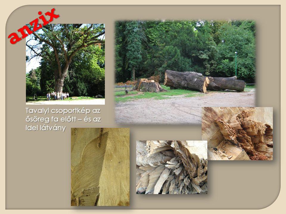 Tavalyi csoportkép az ősöreg fa előtt – és az idei látvány