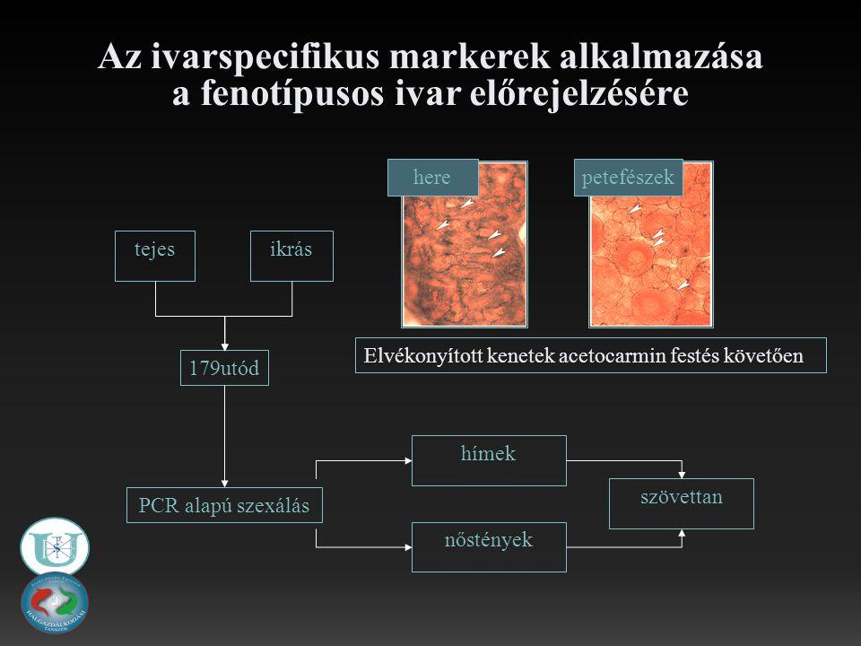 Az ivarspecifikus markerek alkalmazása a fenotípusos ivar előrejelzésére 179utód ikrástejes szövettan PCR alapú szexálás nőstények hímek petefészek here Elvékonyított kenetek acetocarmin festés követően